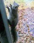 squirrel on a screen
