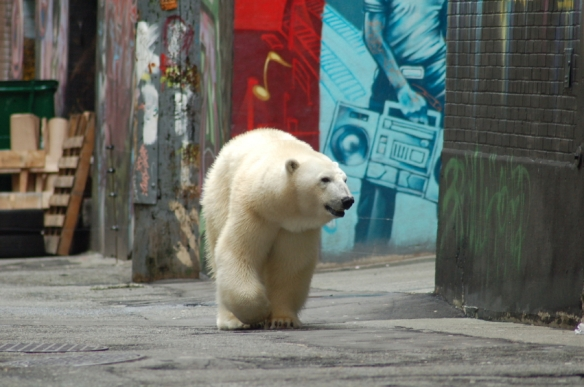 polar bear strolling through downtown Vancouver