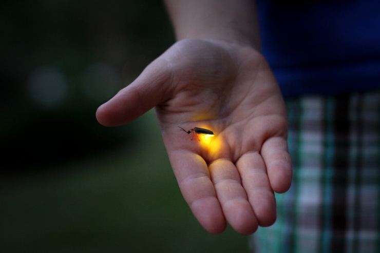 firefly in someone's palm