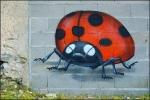 french ladybug