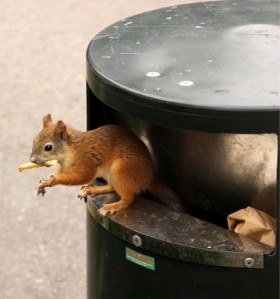 red squirrel in trash can by Rémi Lanvin cc