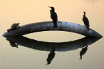 turtle and 2 cormorants sunning on Ibirapuera Lake, Sao Paulo, Brazil by Diego Torres Silvestre cc