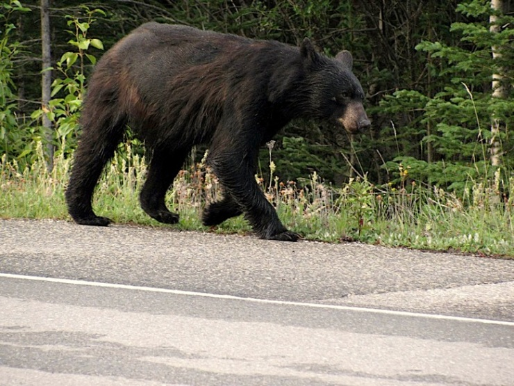 wildlife and roads, wildlife watching, wildlife habitat