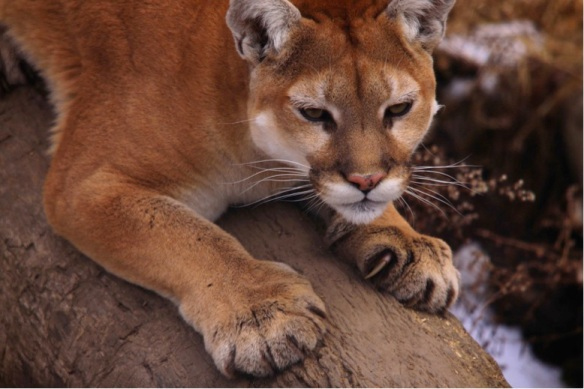 cougars next door nudes