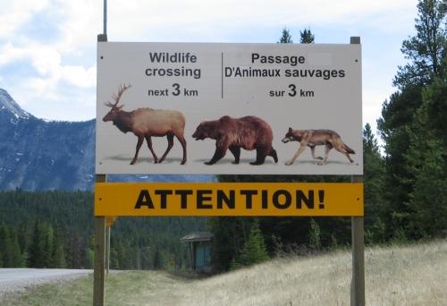 Next-Door Nature, wildlife crossing sign, Canada