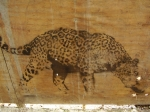 111413 jaguar stalking the urban jungle (Photo: Dinesh Rao, CCL)