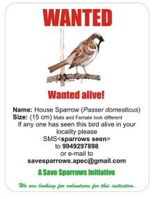 save-sparrow