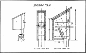sparrow trap (Albert F. Siepert, Project Gutenberg License)