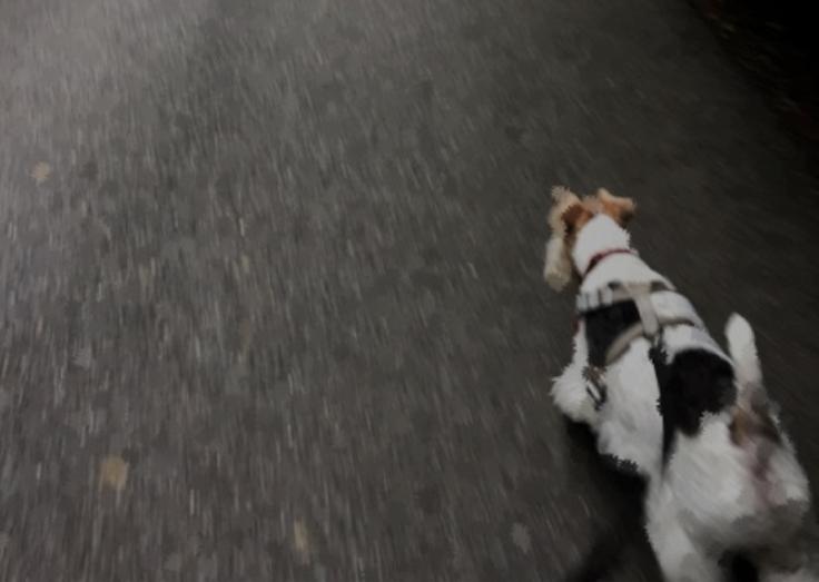 Dash on a walk by Kieran Lindsey